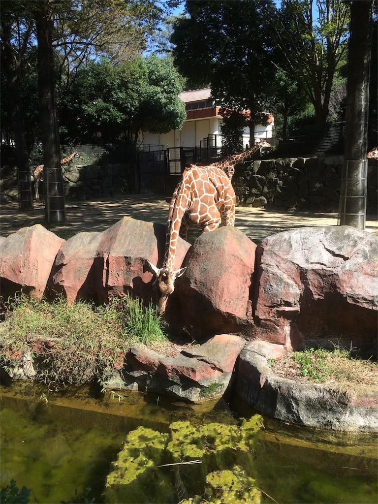 金沢動物園 キリン 下も食べられるよ