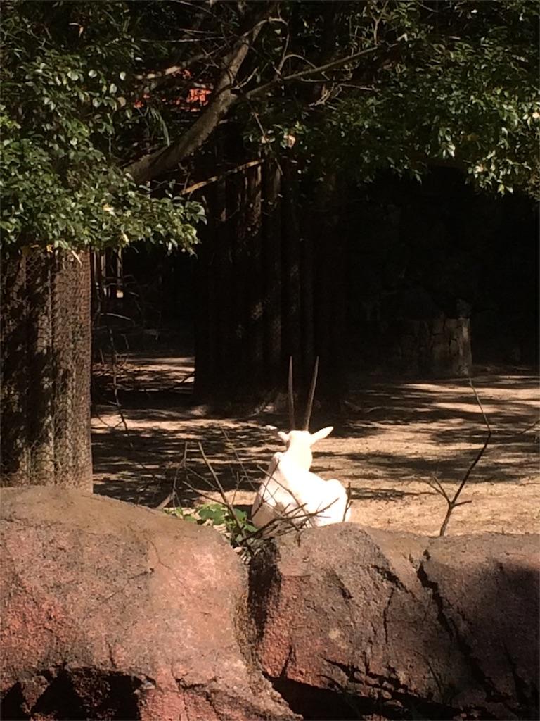 金沢動物園 アラビアオリックス