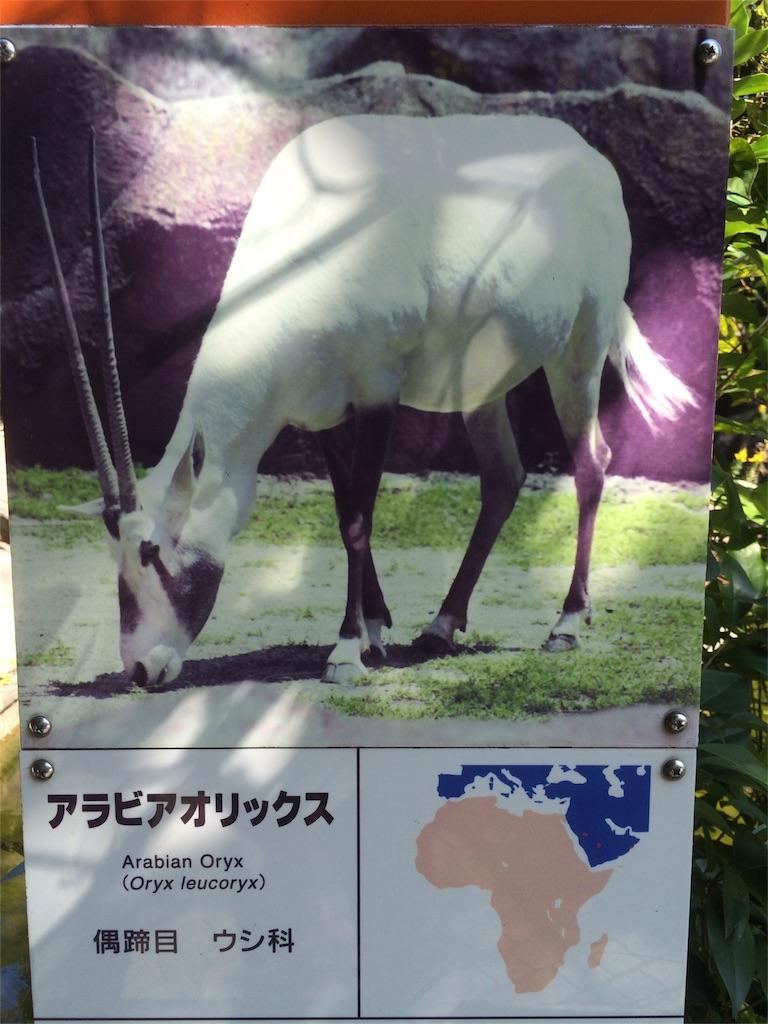 金沢動物園 アラビアオリックス 説明文