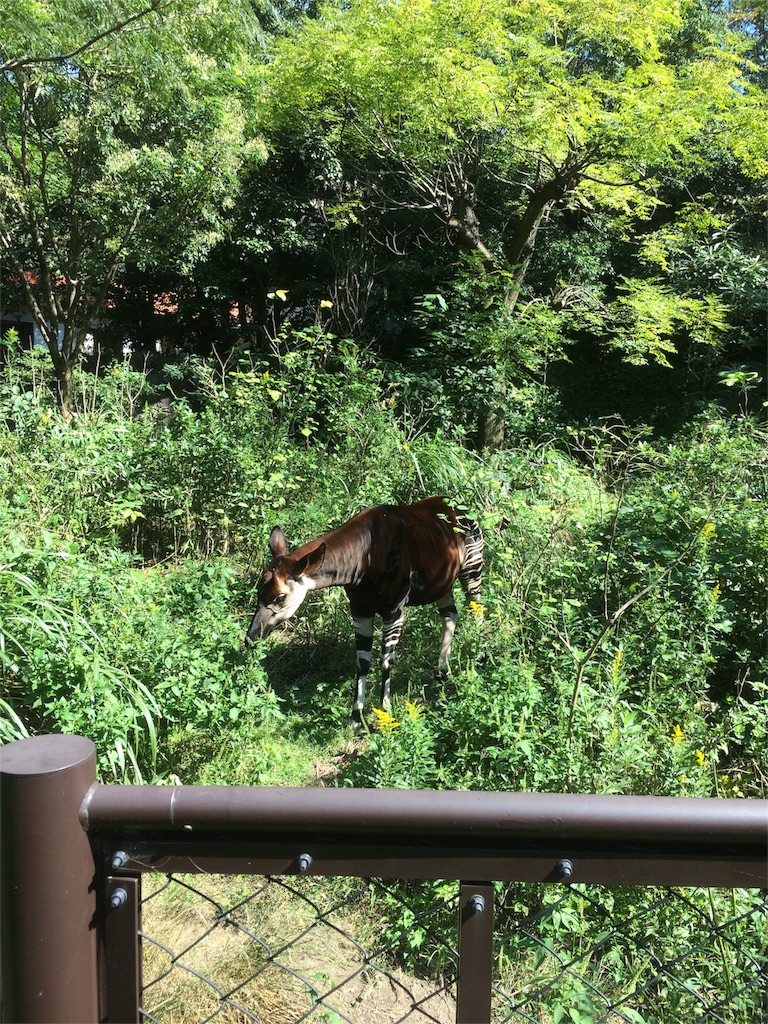 金沢動物園 オカピ