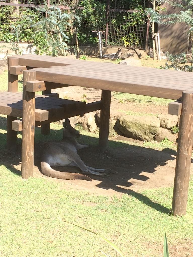 金沢動物園 カンガルー