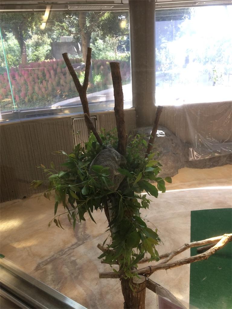 金沢動物園 コアラ 寝てる