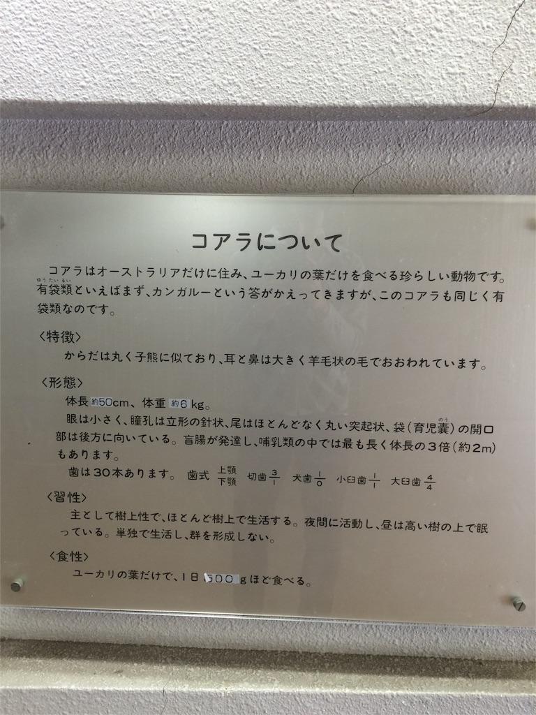 金沢動物園 コアラの生態