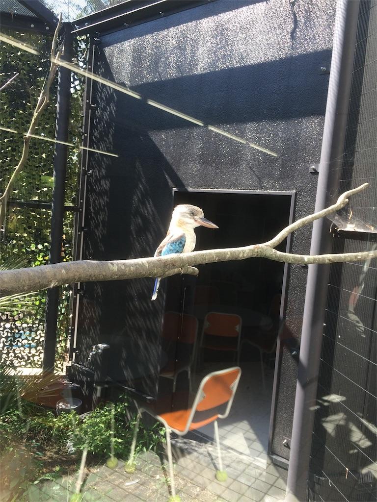 金沢動物園 カワセミ