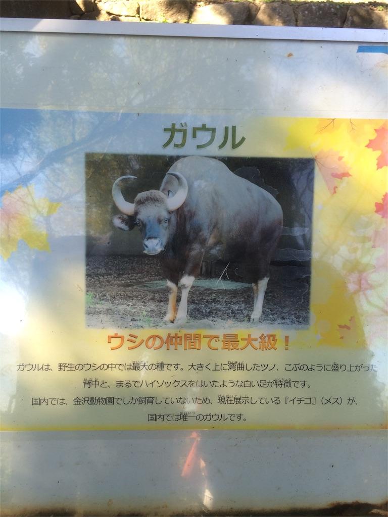 金沢動物園 ガウルの生態