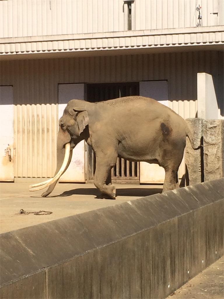 金沢動物園 ゾウ 角が立派