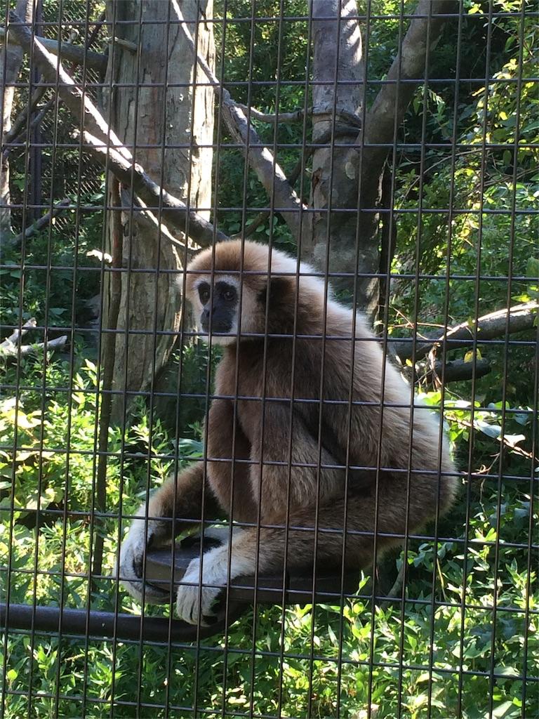 金沢動物園 テナガザル