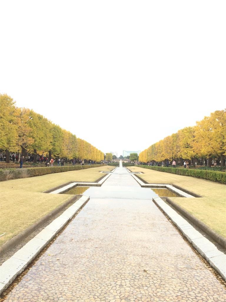 昭和記念公園 イチョウ