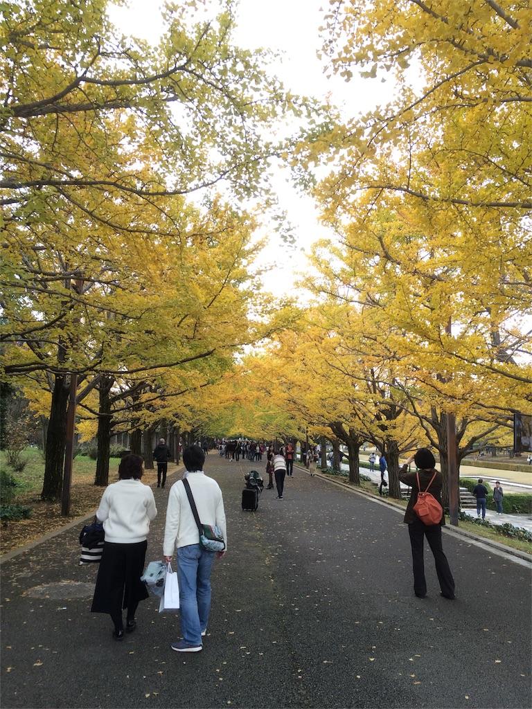 昭和記念公園 イチョウの並木道