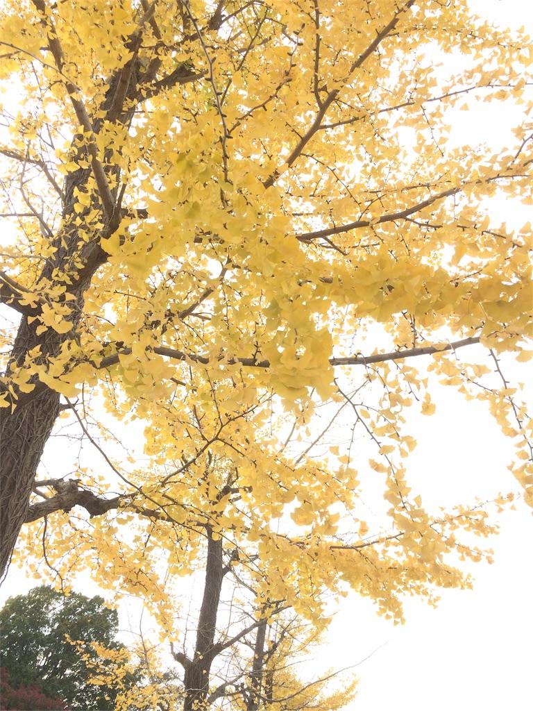 昭和記念公園 イチョウの葉