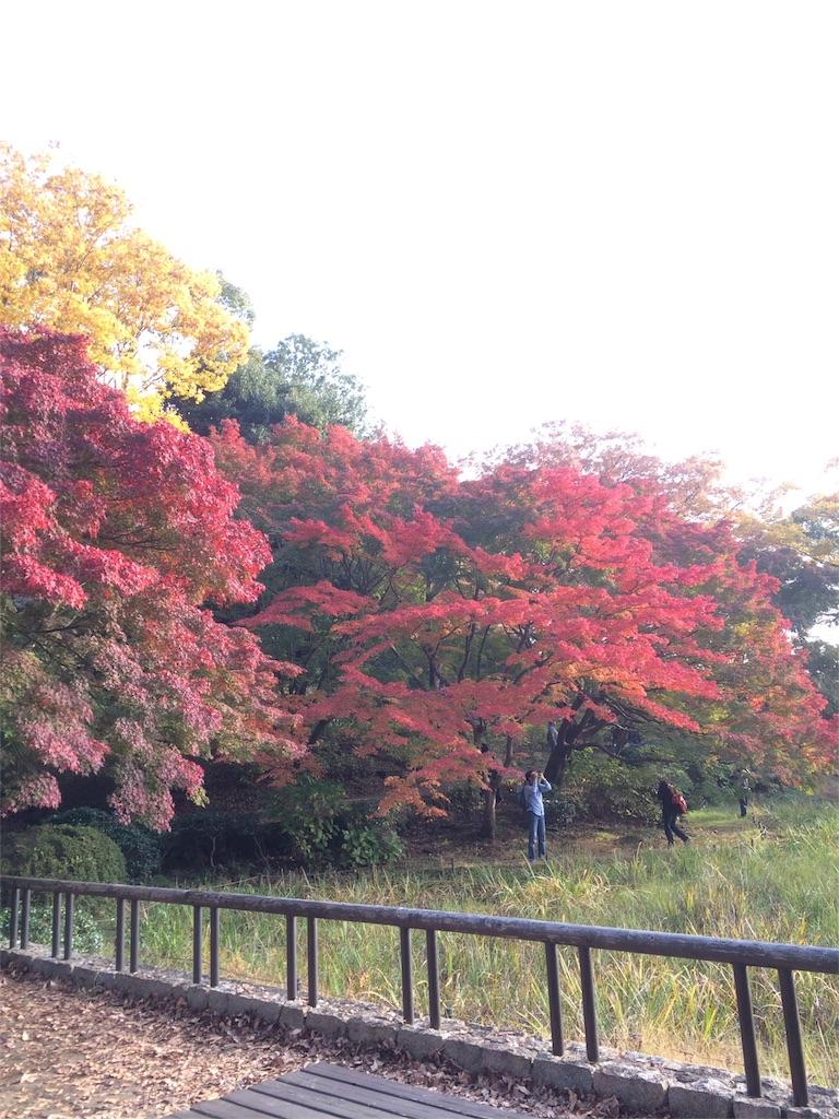 昭和記念公園 モミジ2
