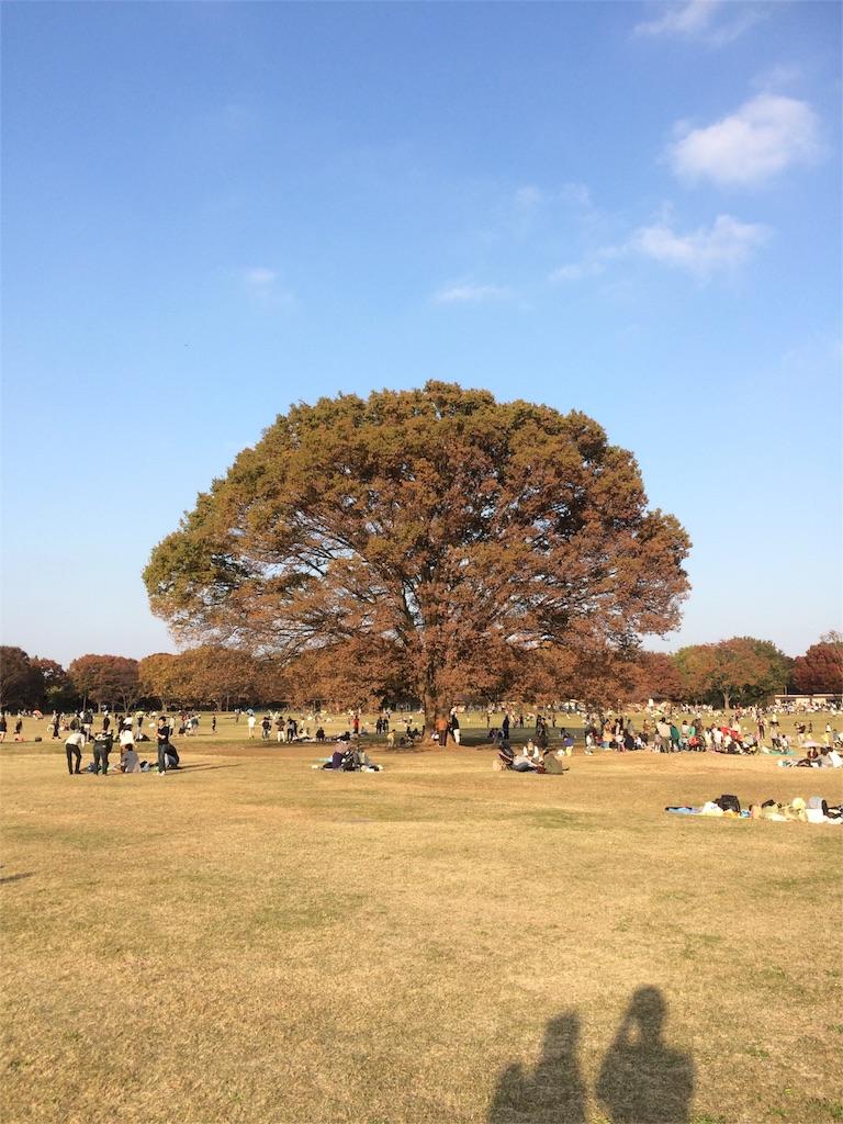昭和記念公園 この木何の木