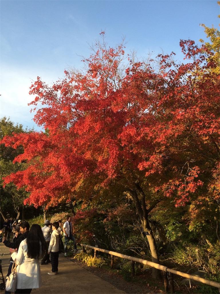 昭和記念公園 日本庭園 もみじ