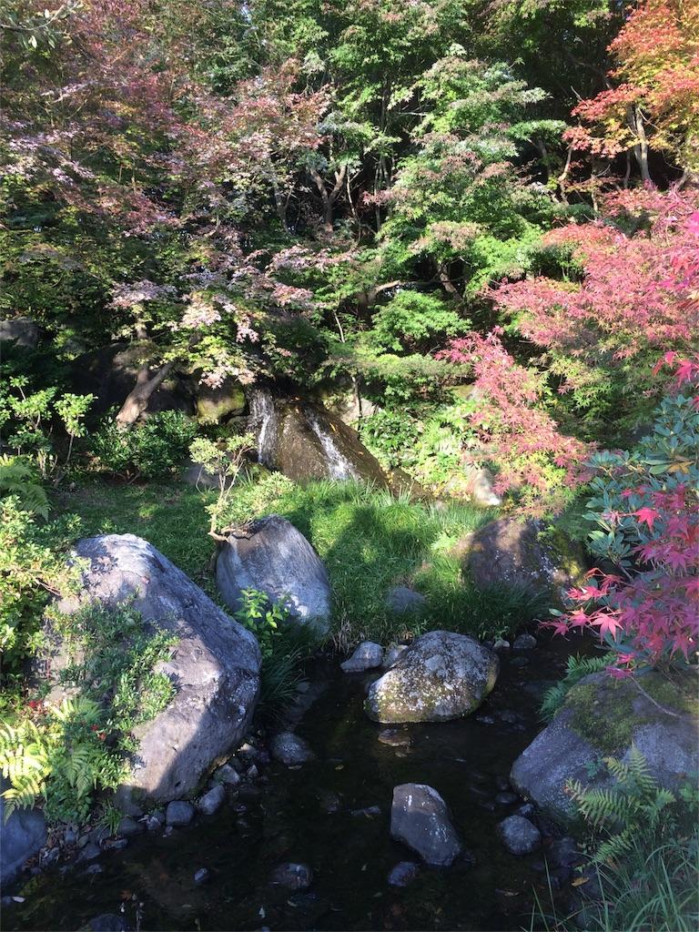 昭和記念公園 水辺