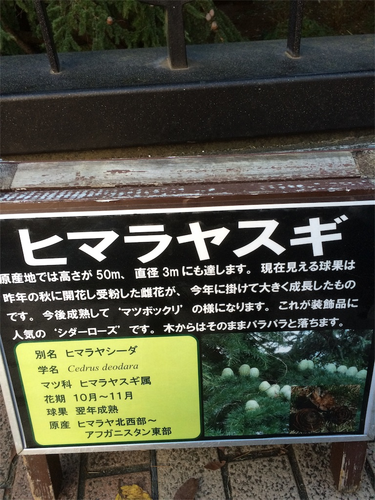 昭和記念公園 マツボックリ説明