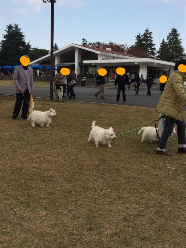 昭和記念公園 犬