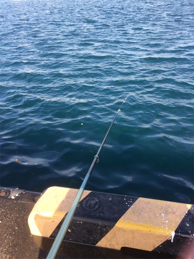 三浦半島 城ヶ島 堤防釣り