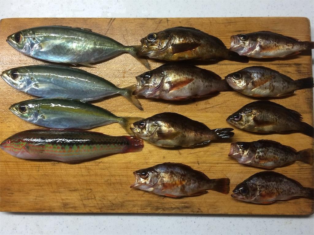三浦 城ヶ島 魚釣り