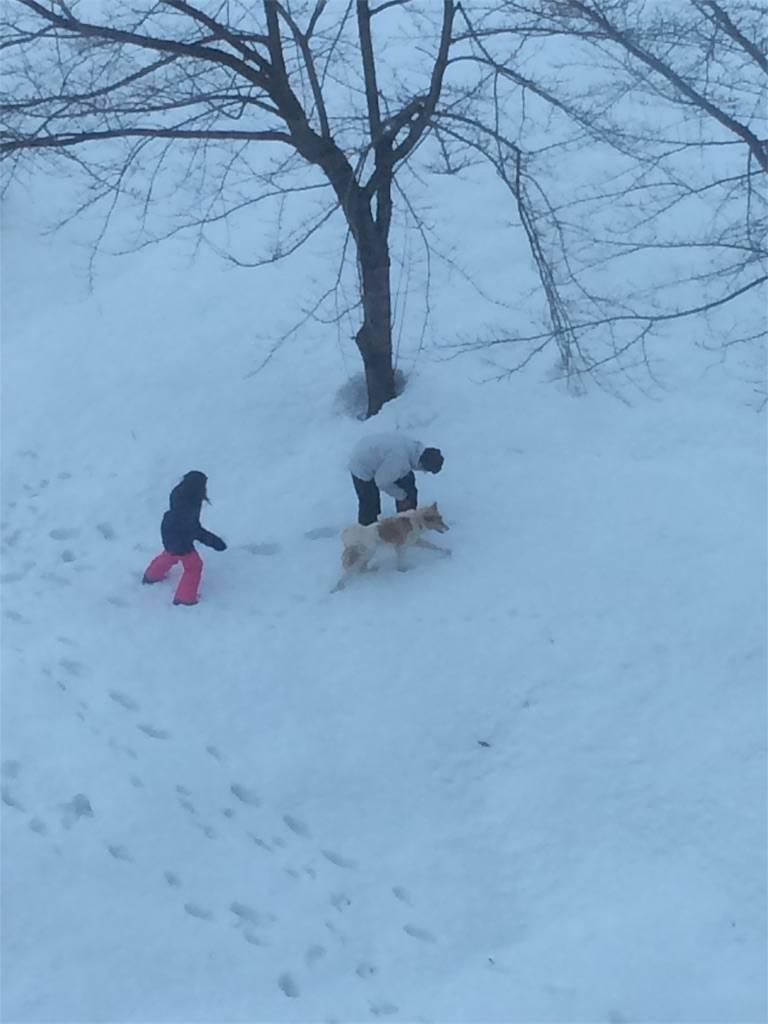 KKR湯沢ゆきぐに 犬と銀世界