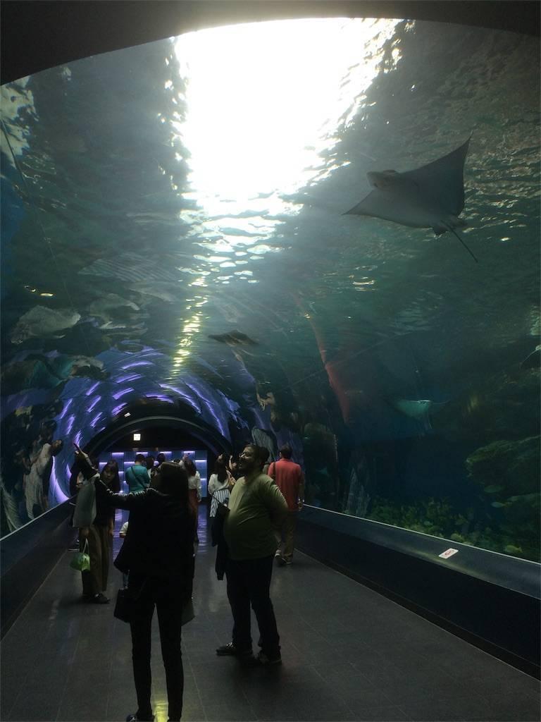 アクアパーク品川 水族館 トンネル