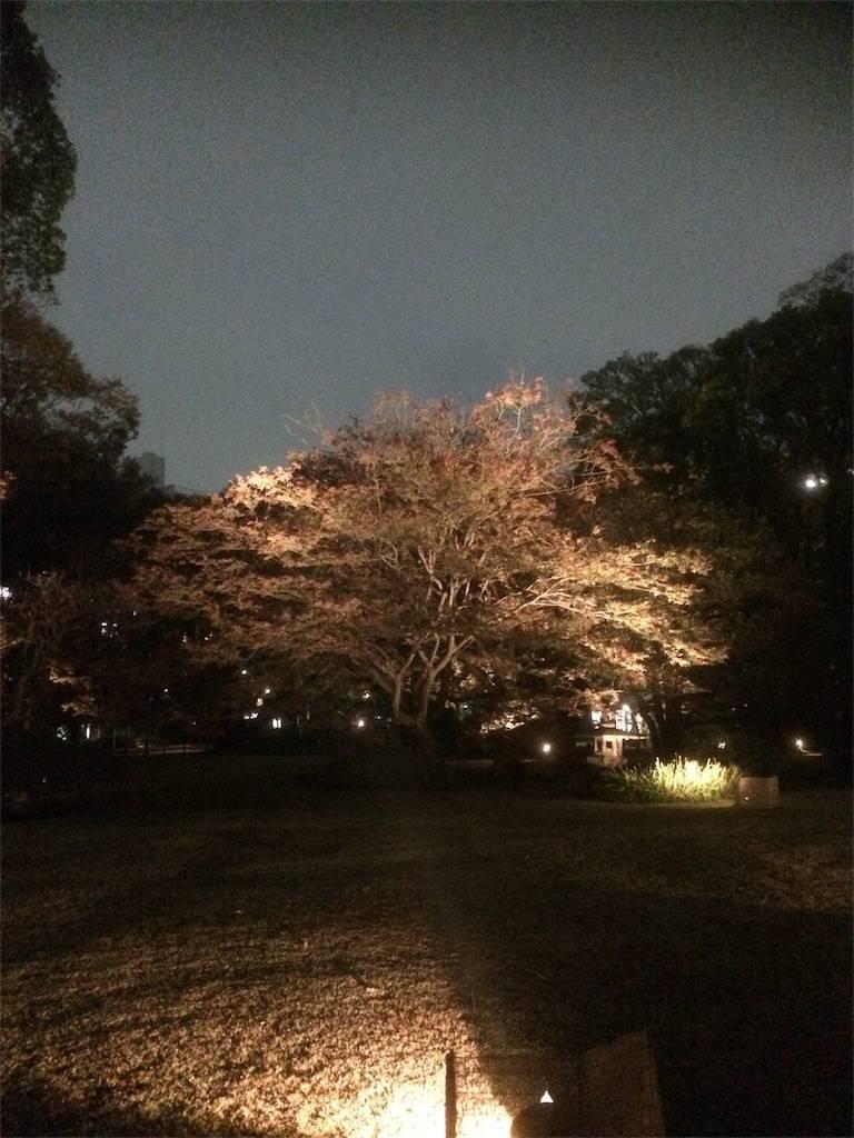 六義園 紅葉 ライトアップ6 2017年
