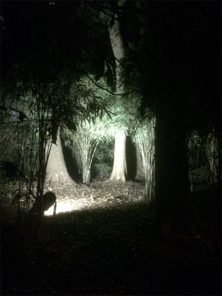 六義園 紅葉 ライトアップ8 2017年