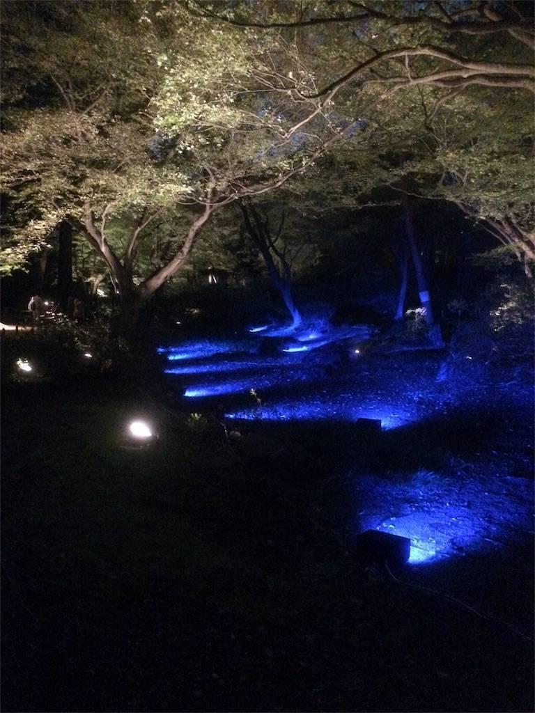 六義園 紅葉 ライトアップ9 2017年