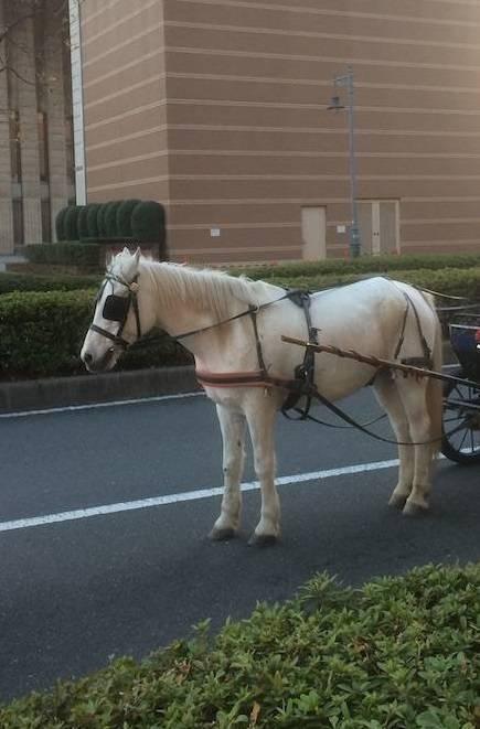 横浜 みなとみらい 赤レンガ 白馬