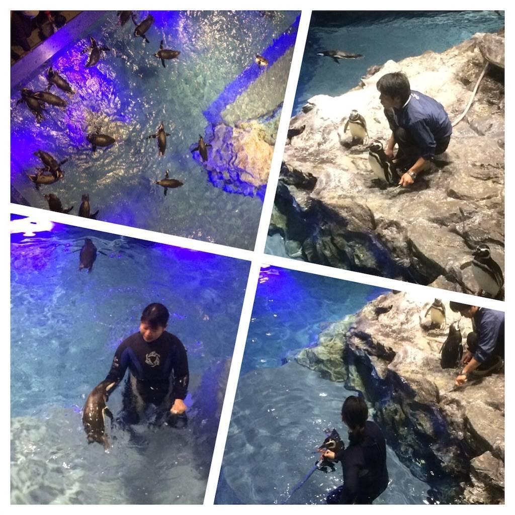 すみだ水族館 ペンギンと飼育員の戯れ