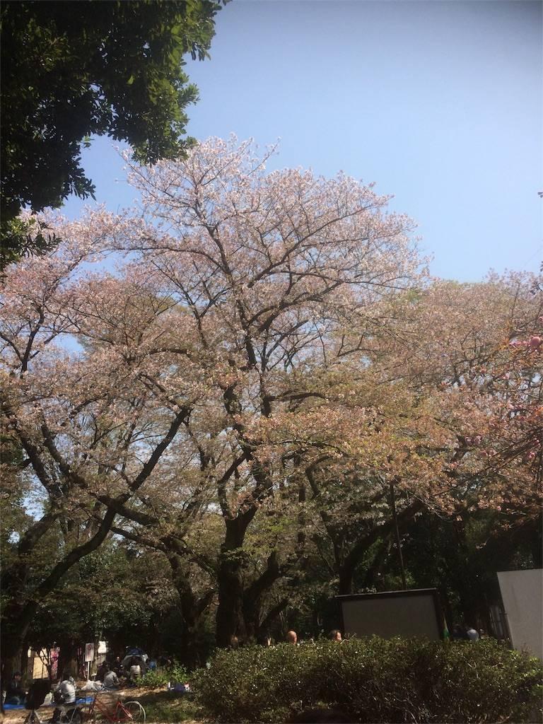 駒沢オリンピック公園 お花見 目黒区 2018年