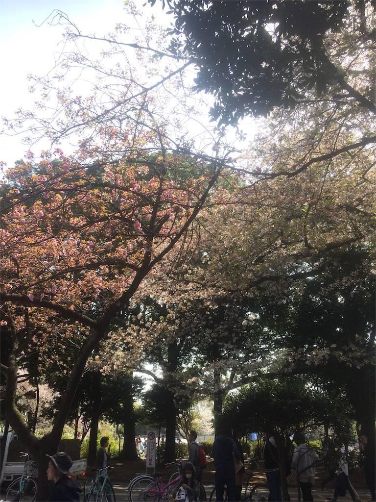 駒沢オリンピック公園 お花見2 目黒区 2018年