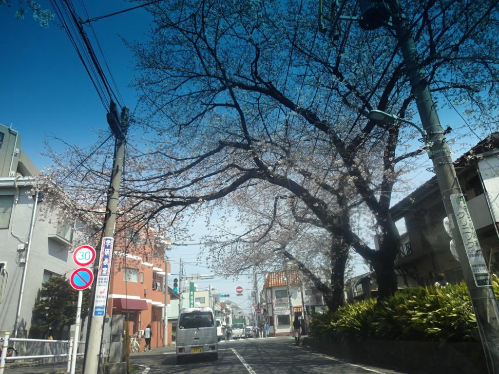 f:id:chiriquunobu:20170405112607j:plain