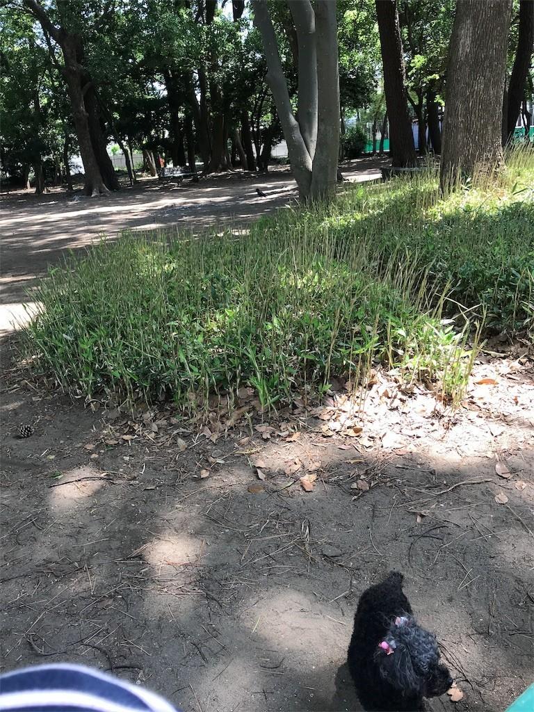 f:id:chiriquunobu:20180617164340j:image