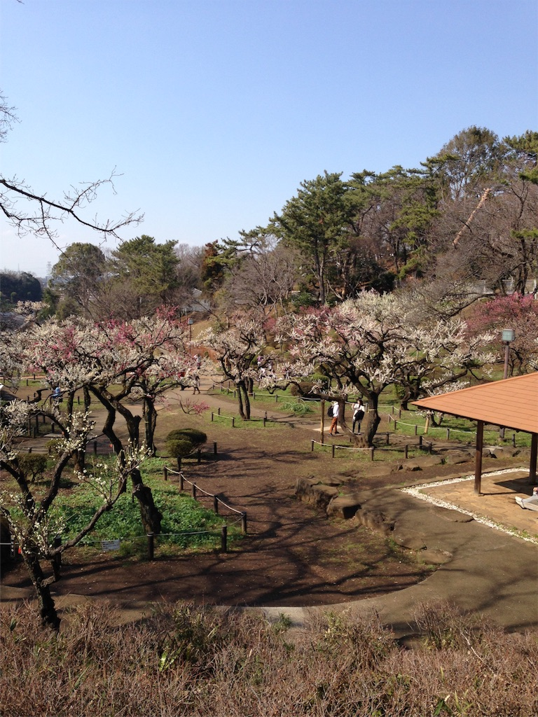 f:id:chisakukurasu:20190309142901j:image