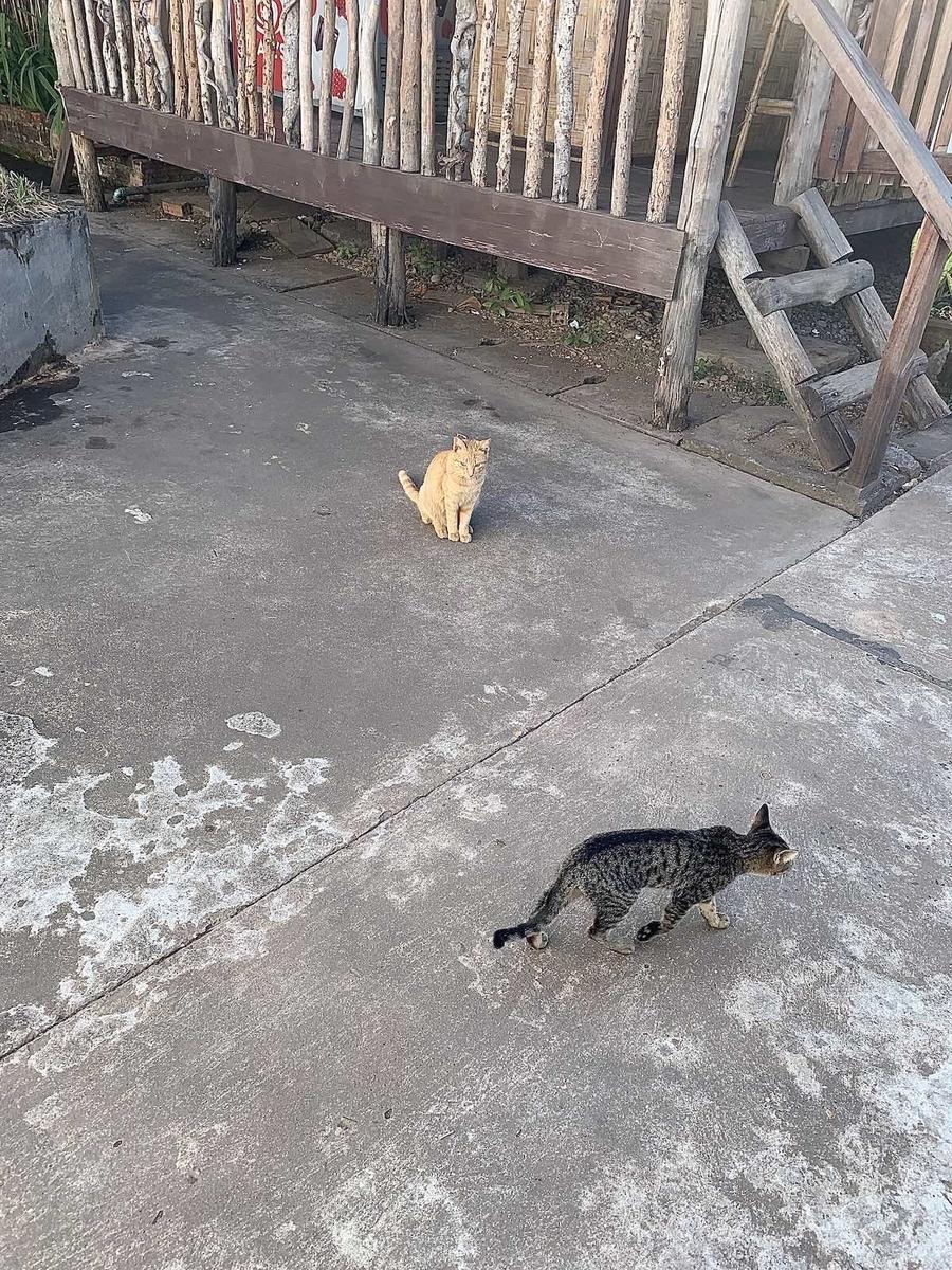 コープ・ビジターセンター のネコたち