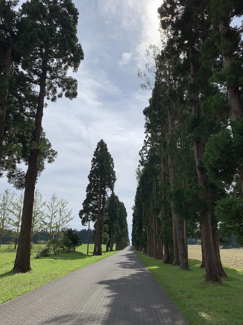 トラピスト修道院の並木道