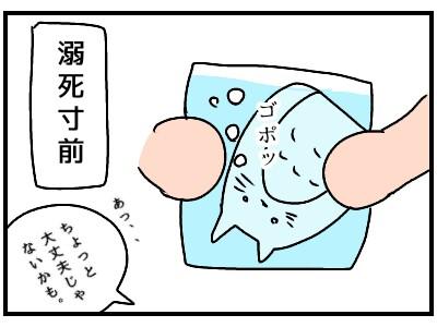 f:id:chiyohapi:20190928065259j:image