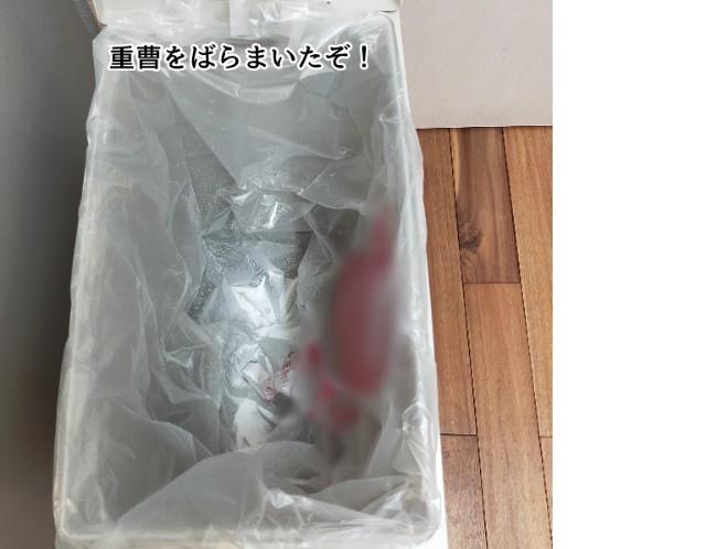 f:id:chiyohapi:20210505065242j:image