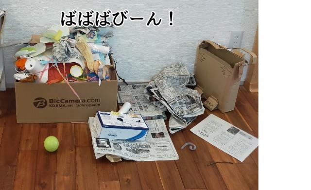 f:id:chiyohapi:20210512140639j:image