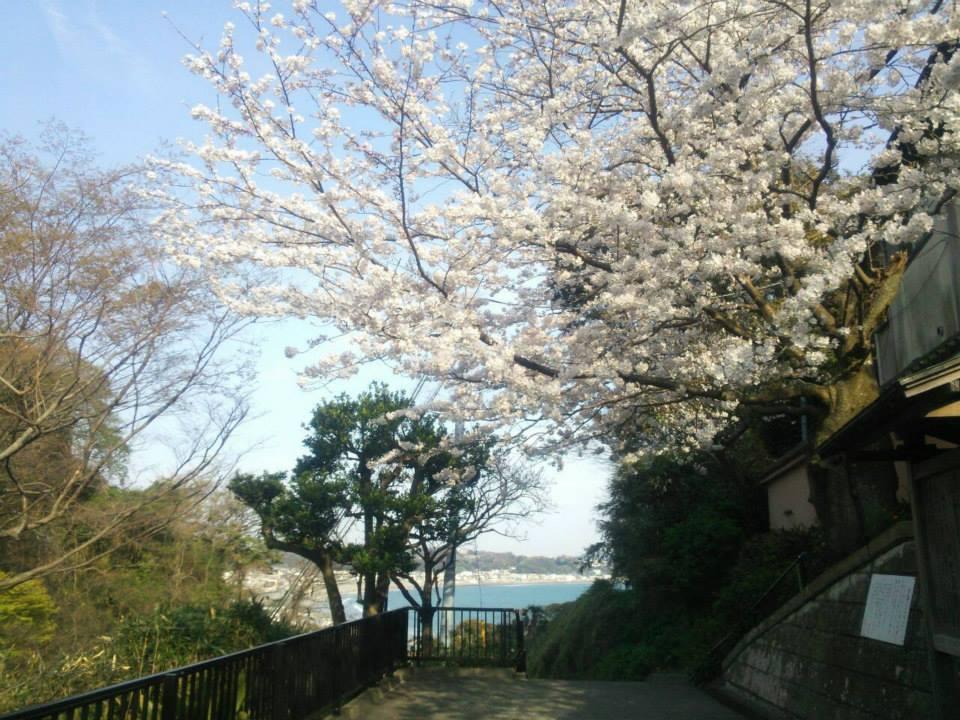 f:id:chizuchizuko:20170131230221j:plain
