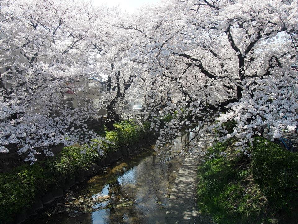 f:id:chizuchizuko:20170309104937j:plain