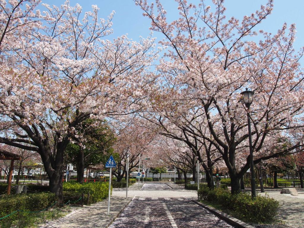 f:id:chizuchizuko:20170416215110j:plain