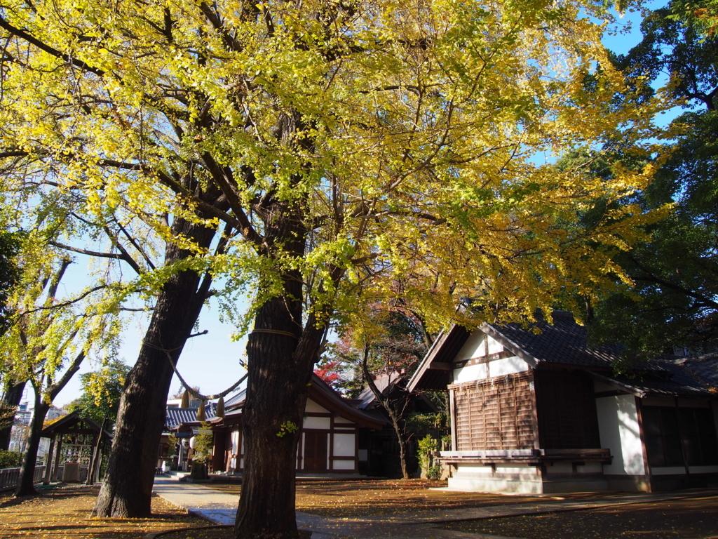 f:id:chizuchizuko:20171124005620j:plain