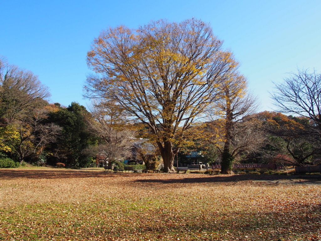 f:id:chizuchizuko:20171214231332j:plain