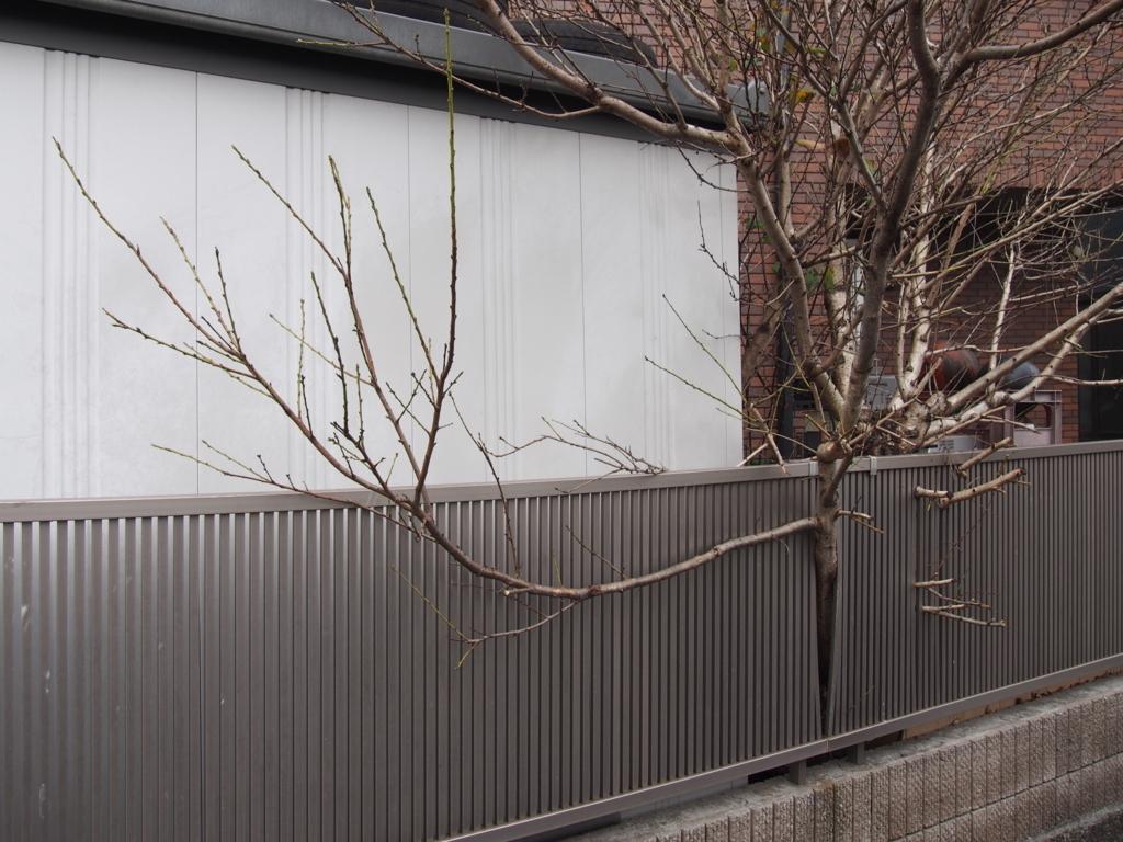 f:id:chizuchizuko:20180114211642j:plain