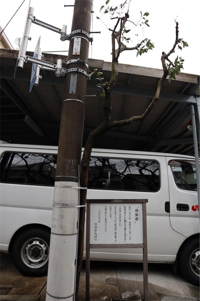 f:id:chizuchizuko:20180202211733j:image