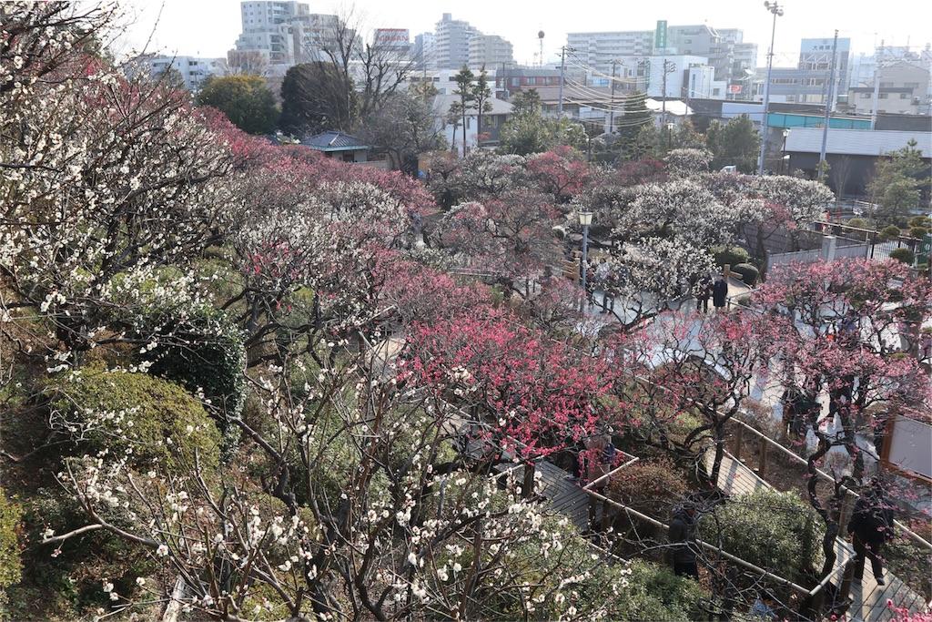 f:id:chizuchizuko:20180224200250j:image