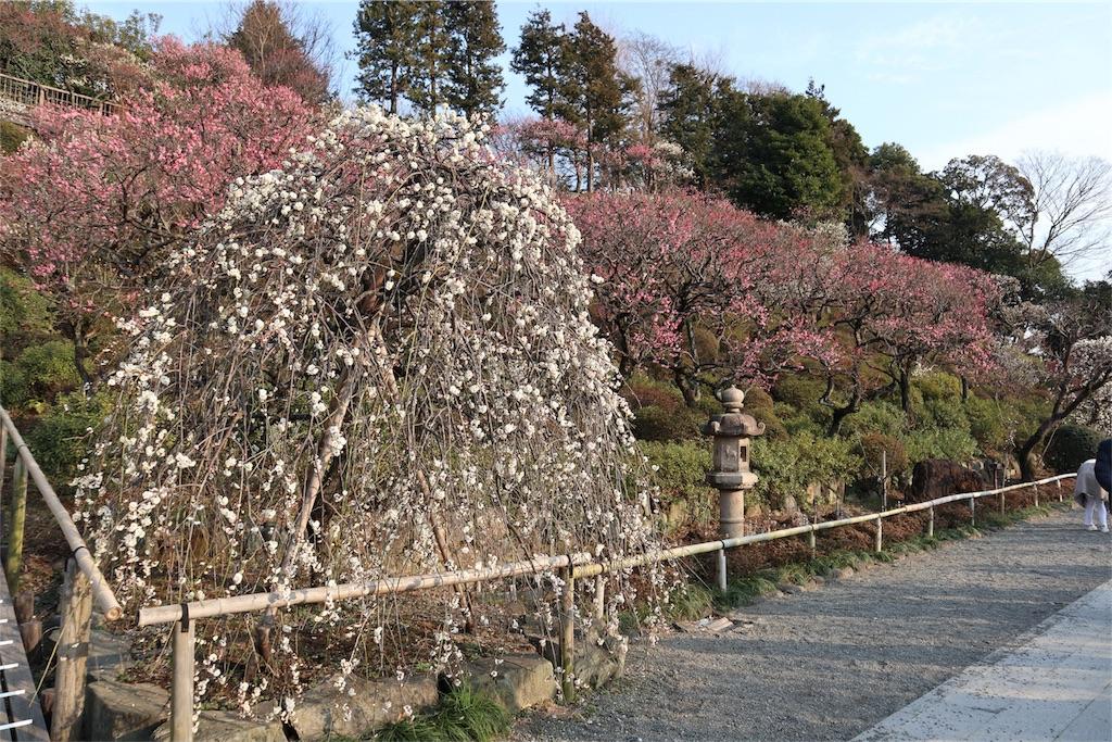 f:id:chizuchizuko:20180224200724j:image