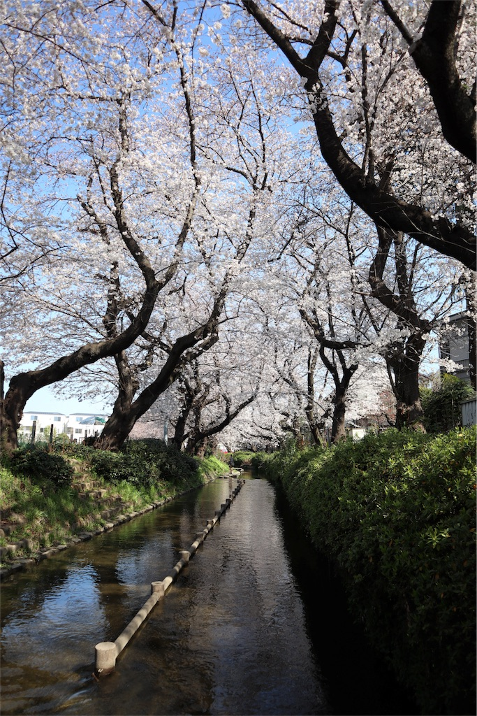 f:id:chizuchizuko:20180325154709j:image