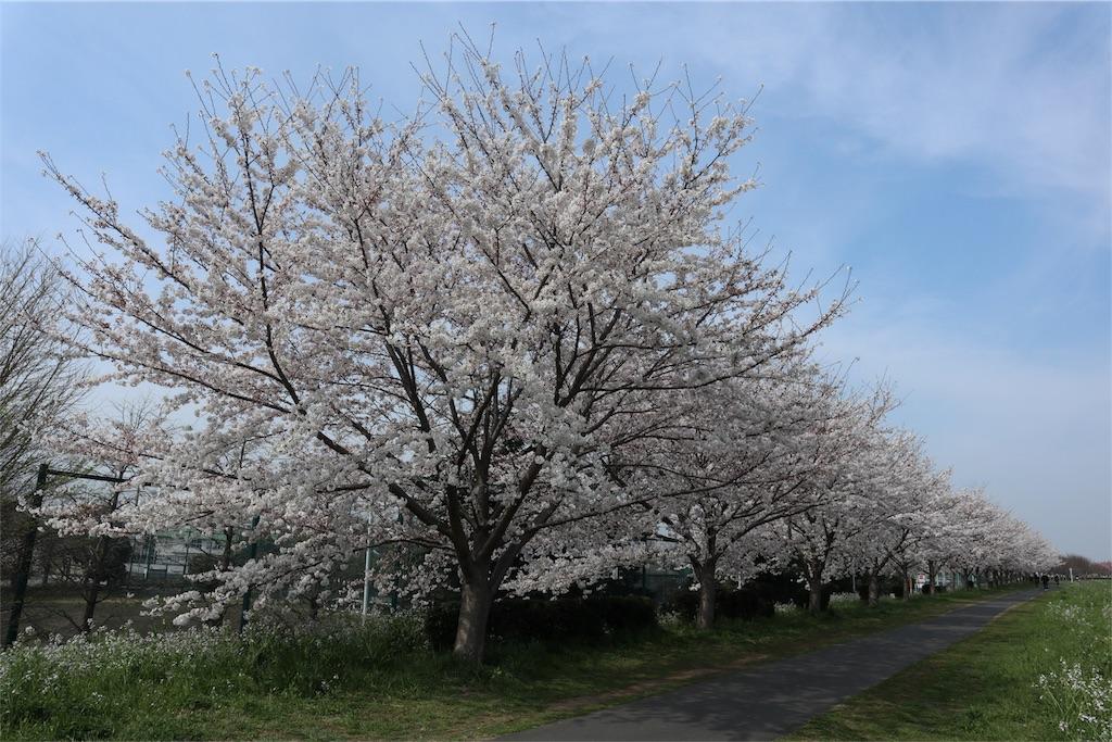 f:id:chizuchizuko:20180328230039j:image
